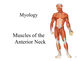 06 – Muscles of the Anterior Neck