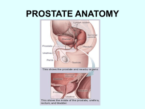 prostate anatomy - Forrest General Hospital