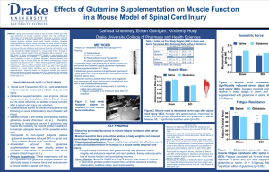Effects of Glutamine Supplementation on Muscle