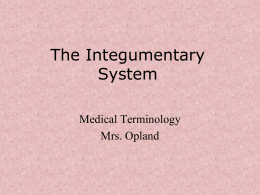The Integumentary System - Mrs. Opland`s Health Care Classes