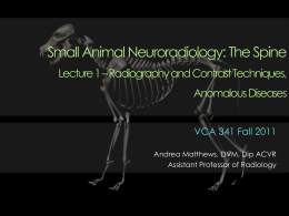Small Animal Neuroradiology: The Spine