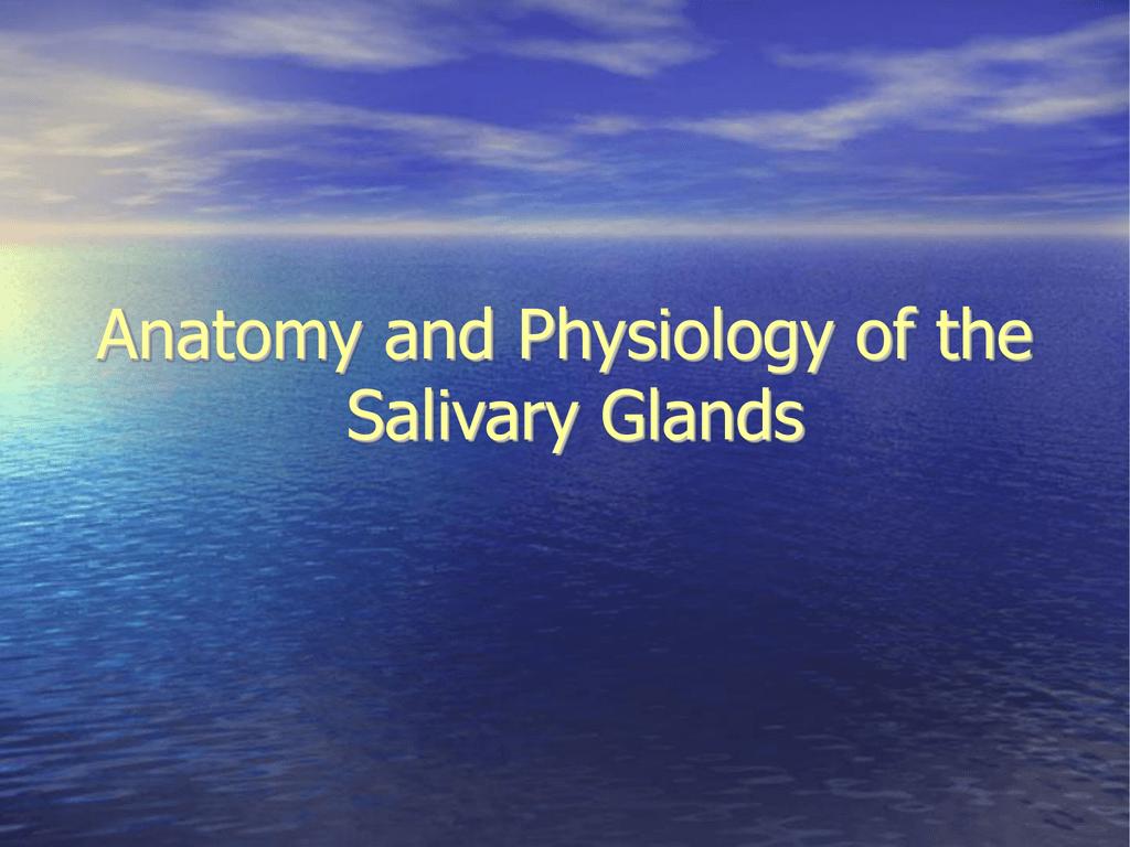 anatomy-and-physiology-of-the-salivary-gland