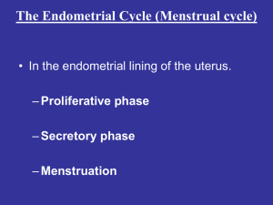 The Endometrial Cycle (Menstrual cycle)