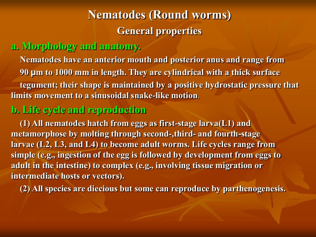 Enterobius vermicularis worms -