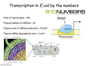 mRNA production in E.coli