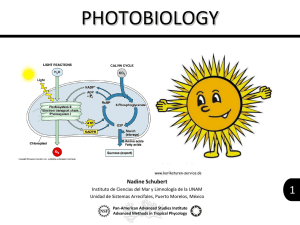 Photosynthesis and Fluorescence