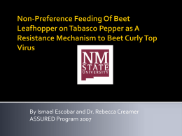 Non-Preference Feeding Of Beet Leafhopper on Tabasco Pepper as
