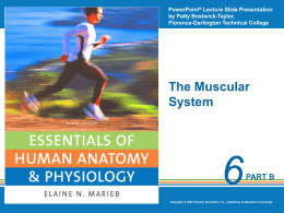 Physiology of Muscle Part 2
