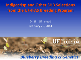 Indigocrisp and Other SHB Selections from the UF