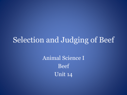 Selection and Judging of Beef