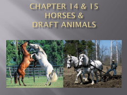Ch 14 & 15 Horses and Draft Production pp_