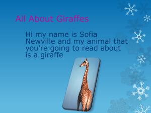The giraffes are adapted to their habitat by having long necks these