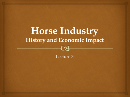 Texas Horse Industry