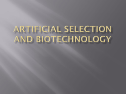 Artificial Selection and Biotechnology Selective breeding