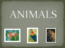 ANIMALS POWERPOINT - KimberlyTechnologyIntegration