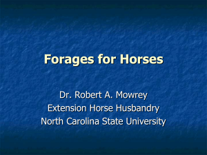 Forages for Horses - Perquimans County Center