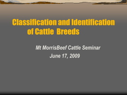 Beef Cattle Classification and ID (51 slides, 2388 KB )