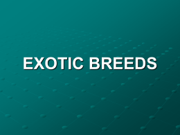 Six Exotic Breeds of Cattle, ppt Presentation, Click here to open