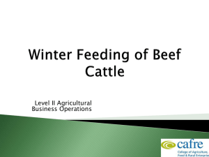 Beef Production Week 3 Winter Feeding of Beef Cattle