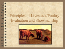 Beef and Swine Grading PowerPoint