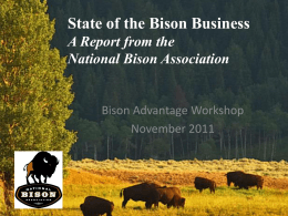 Presentation - Bison Advantage | Workshop