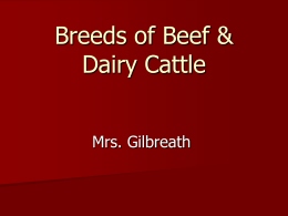 Beef Breed PowerPoint Student Notes