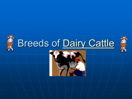Breeds of Dairy Cattle - Dr. Brahmbhatt`s Class Handouts