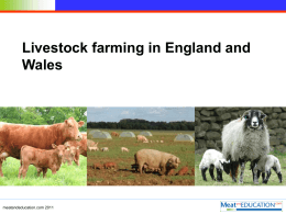 Livestock farming in England and Wales
