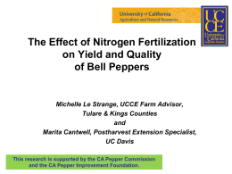 The Effect of Nitrogen Fertilization on Yield and Quality of Bell Peppers