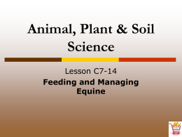 Feeding and Managing Equine