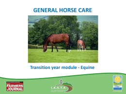 General Horse Care