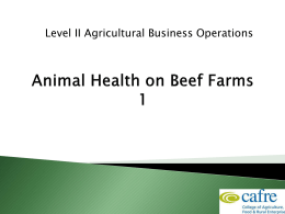 Beef Animal Health Week 1 9.24MB