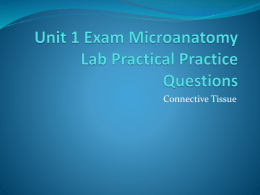 Unit 1 Exam Microanatomy Lab Practical Practice Questions