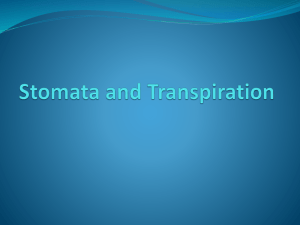 Stomata_and_Transpiration