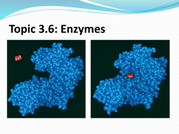 Topic 3.6: Enzymes - IBDPBiology-Dnl