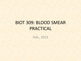 BIOT 309: BLOOD SMEAR PRACTICAL