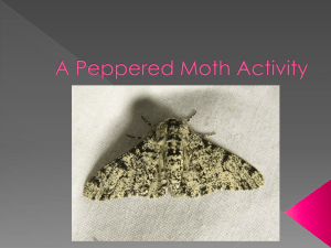 A Peppered Moth Activity