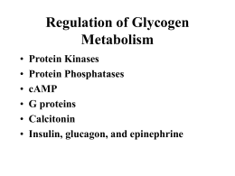 LECT 06 Glycogenregulation