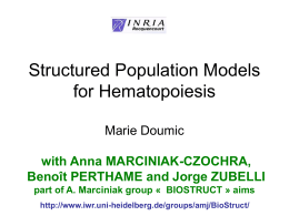 Structured population models for hematopoiesis
