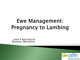 Sheep Production Week 3 Ewe Management Pregnancy to