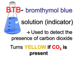 relationship between carbon dioxide and bromothymol blue