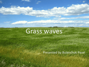 Grass waves