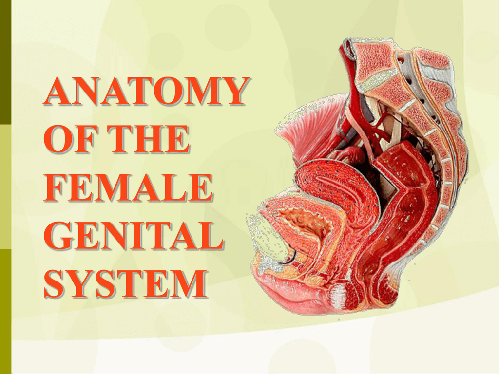 Anatomy Of Female Genital System Drosman