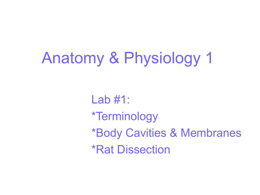 A&P_Lab 1 Rat Dissection