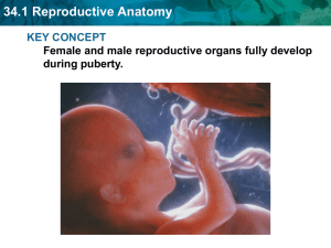 34.1 Reproductive Anatomy