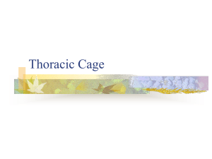 7.8 thoracic cage