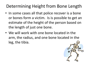 Determining Height from Bone Length activity