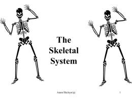 skeleton review skeletal system at birth the human body. Black Bedroom Furniture Sets. Home Design Ideas
