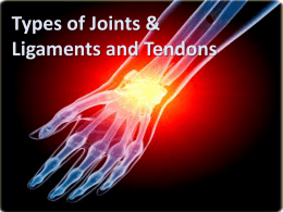 Types of Joints & Ligaments and Tendons
