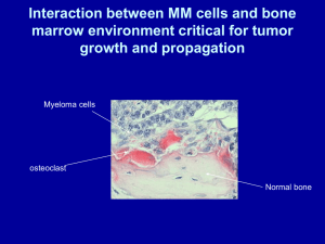 Interaction between MM cells and bone marrow environment critical